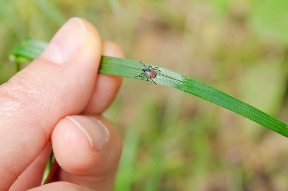 Novas Abordagens para Lyme: Antigos Remédios e Doenças Modernas